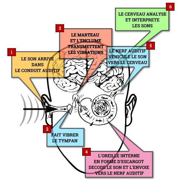 Le circuit du son