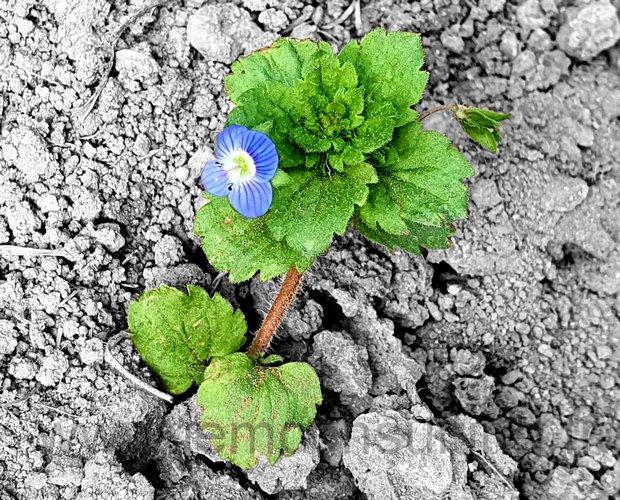 fleur de résilience